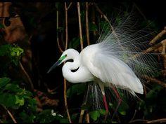 Ranganthittu Bird Sanctuary - in Karnataka, India