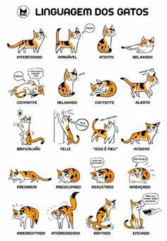 Pri Martinez: Linguagem dos gatos