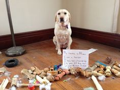 Gosh I love dogs.haha Dog shaming: My name is Missy. I am a hoarder. I have been a hoarder for 2 years. If Mom had not moved the couch I would still be hoarding. Funny Shit, Funny Cute, Funny Memes, Funny Stuff, Super Funny, I Love Dogs, Puppy Love, Cute Dogs, Animal Memes