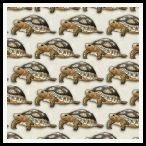 free tortoise backing paper pack cream