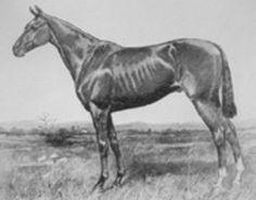 A Chronological Index of Kentucky Derby Winners, Part Kentucky Derby Race, Derby Horse, Preakness Stakes, Horse Sketch, Triple Crown Winners, American Pharoah, Derby Winners, Sport Of Kings, Thoroughbred Horse