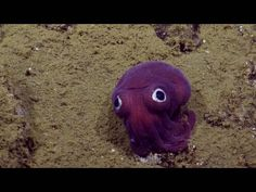 Let's imagine that your students are researchers and they meet a magical creature at the ocean floor that can speak English. The researchers will interview the squid and try to find out more about its life. Students are asked to unscramble the interview questions of the research team in this video quiz. Then one by one, ask these question from each other (Role A: researcher, Role B: Googly Squid). You can also have students mingle during the whole exercise and do the Q&A with a new pa...