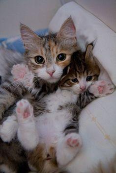 Anne  ve yavru Kedi