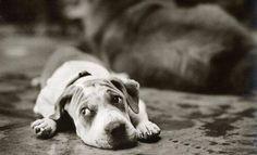 Cute dog:)