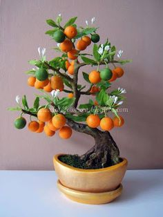 The ancient Japanese art of Bonsai creates a miniature version of a fully grown tree through careful potting, pruning and training. Even if you& not zen enough to labour over your own Bonsai,. Bonsai Fruit Tree, Bonsai Plants, Bonsai Garden, Fruit Trees, Trees To Plant, Garden Plants, Bonsai Pruning, Bonsai Flowers, Bonsai Orange Tree