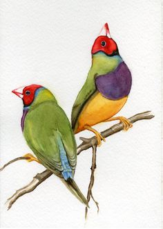 Paintings of birds finches print from original watercolor painting gouldian finches exotic tropical bird painting earthspalette Watercolor Bird, Watercolor Paintings, Bird Paintings, Color Pencil Art, Bird Drawings, Bird Pictures, Sea Birds, Colorful Birds, Bird Prints