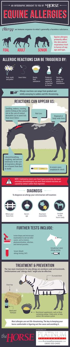 [INFOGRAPHIC] Equine Allergies - Learn more about allergic reactions in horses with this step-by-step visual guide, brought to you by TheHorse.com and @Susan Brown Performance #horses #horsehealth #allergies