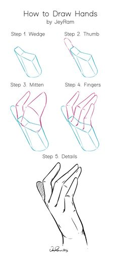 hand anatomy drawing