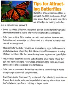 Tips for attracting butterflies