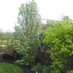 10 Best Landscaping Ideas for Backyard – Gardening Decor Garden Shrubs, Flowering Shrubs, Landscaping Plants, Trees And Shrubs, Landscaping Ideas, Garden Trees, Patio Ideas, Landscaping Edging, Rain Garden