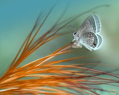 Charming Butterfly by Eleonora Di Primo