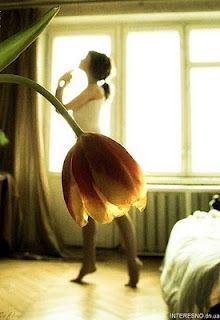 .flower ballet #tulip #dancer