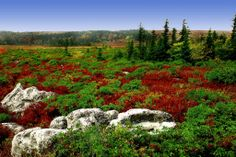 Dolly Sods, WV    Tundra-like area with Bog and Heath