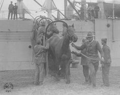 An epic stream of World War I American war horses flowed to Europe from Newport News. Pictures from part two of my WWI series. -- Mark St. John Erickson