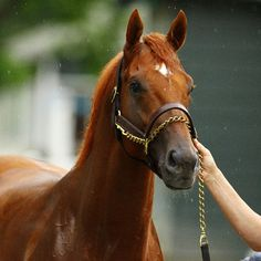 Almost Royal: 12 Horses Who Nearly Won the Triple Crown