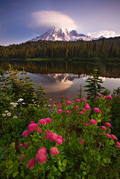 Mt. Rainier National Park in the early morning.
