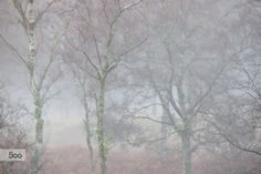 Deeside Mist by Tim Haynes on 500px