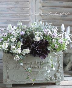 Fall Wedding Flowers, Autumn Wedding, Moon Garden, Garden Art, Amazing Flowers, Pretty Flowers, Container Plants, Container Gardening, Window Box Flowers