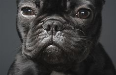 Dog-Photography-by-Tim-Flach-3