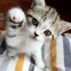 "cutencats: "" @cutencats """