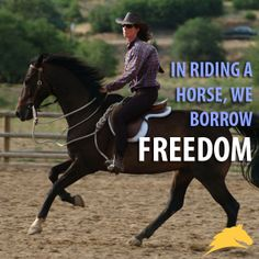 116 Best Horse Quotes Images In 2016 Horse Quotes
