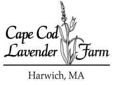 Cape Cod Lavender Farm is located in Harwich, Massachusetts.