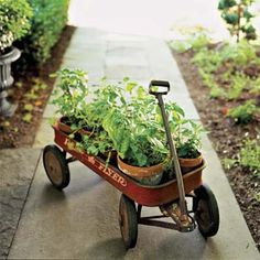 Mobile herb garden. Easy to move to catch the sun.