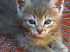 My new Cat: Mizuiiro!