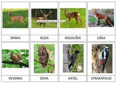 20 kartiček s lesními zvířátky Education, Fall, Dogs, Animals, Vocabulary, Autumn, Animales, Fall Season, Animaux
