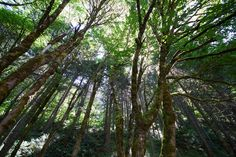 Wide-angle forest from my USA photo set on Flickr