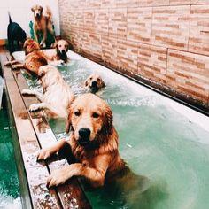 :) pups