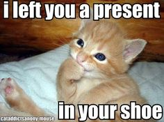 a present in your shoe lol cat
