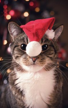 Love Cute Animals shares pics of playful animals, cute baby animals, dogs that stay cute, cute cats and kittens and funny animal images. Christmas Animals, Christmas Cats, Merry Christmas, Christmas Things, Funny Christmas, White Christmas, Christmas Holidays, Christmas Ideas, Animals And Pets