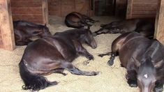 Horses, Peacefully Farting and Snoring... Never before have either farting or snoring been so delightful.