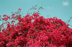 Urban Outfitters - Blog - Photo Diary: LA in Bloom