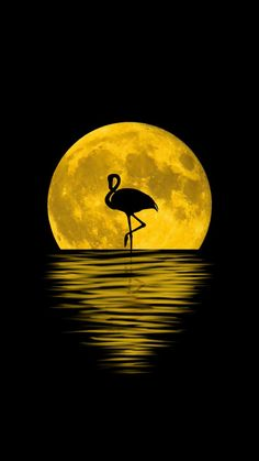Flamingo, moon, silhouette, reflections, digital art, 720x1280 wallpaper