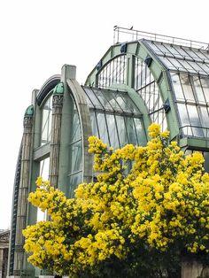 Mimosa super star au Jardin des Plantes de #Paris http://www.pariscotejardin.fr/2017/03/mimosa-super-star-au-jardin-des-plantes-de-paris/