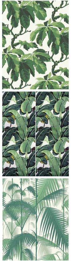 Sissy-Boy Inspiration | Boråstapeters Oxford, Martinique's Beverly Hills Wallpaper och Cole & Sons Palm Jungle