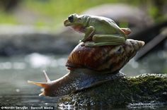 Snail and a lazy passenger
