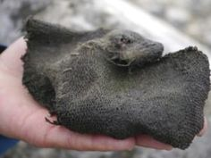 A Viking-era woollen mitten found by a shrinking glacier in the mountains of south Norway in 2011 is seen in this undated handout picture.
