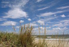 Assateague Island Beaches