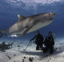 Florida dive with sharks, Jim Abenethy