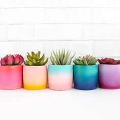 These cement planters are perfect for succulents or small cacti. Choose your color gradient in the drop down menu. Each planter measures 4 tall and 3 in diameter. - Planters - ideas of Planters Painted Plant Pots, Painted Flower Pots, Cement Flower Pots, Painted Pebbles, Flower Planters, Diy Flowers, Flower Vases, Cactus Flower, Potted Flowers