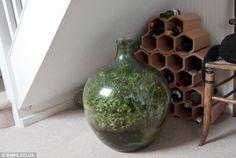 瓶に詰めた植物が密閉された状態で、光合成の完全なるエコサイクルで50年以上も成長を続けている瓶詰ガーデンの紹介