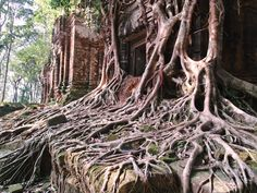 Siem Reap Tour Guides | Angkor Wat Private Tours | Travel To Cambodia