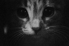 just kitty