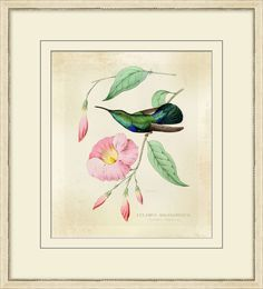 Hummingbird Brilliance 3 Framed Giclee Watercolor