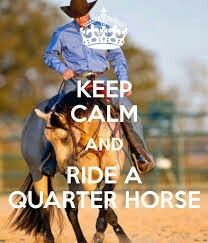 Keep calm Quarter horse