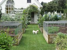 Potager Garden Raised beds with covers - light weight versions could be made from PVC pipe and chicken wire attached with zip ties. Potager Garden, Veg Garden, Edible Garden, Garden Landscaping, Vegetable Gardening, Garden Boxes, Container Gardening, Veggie Gardens, Fruit Garden