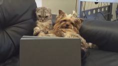 cat and dog watching tv,lol
